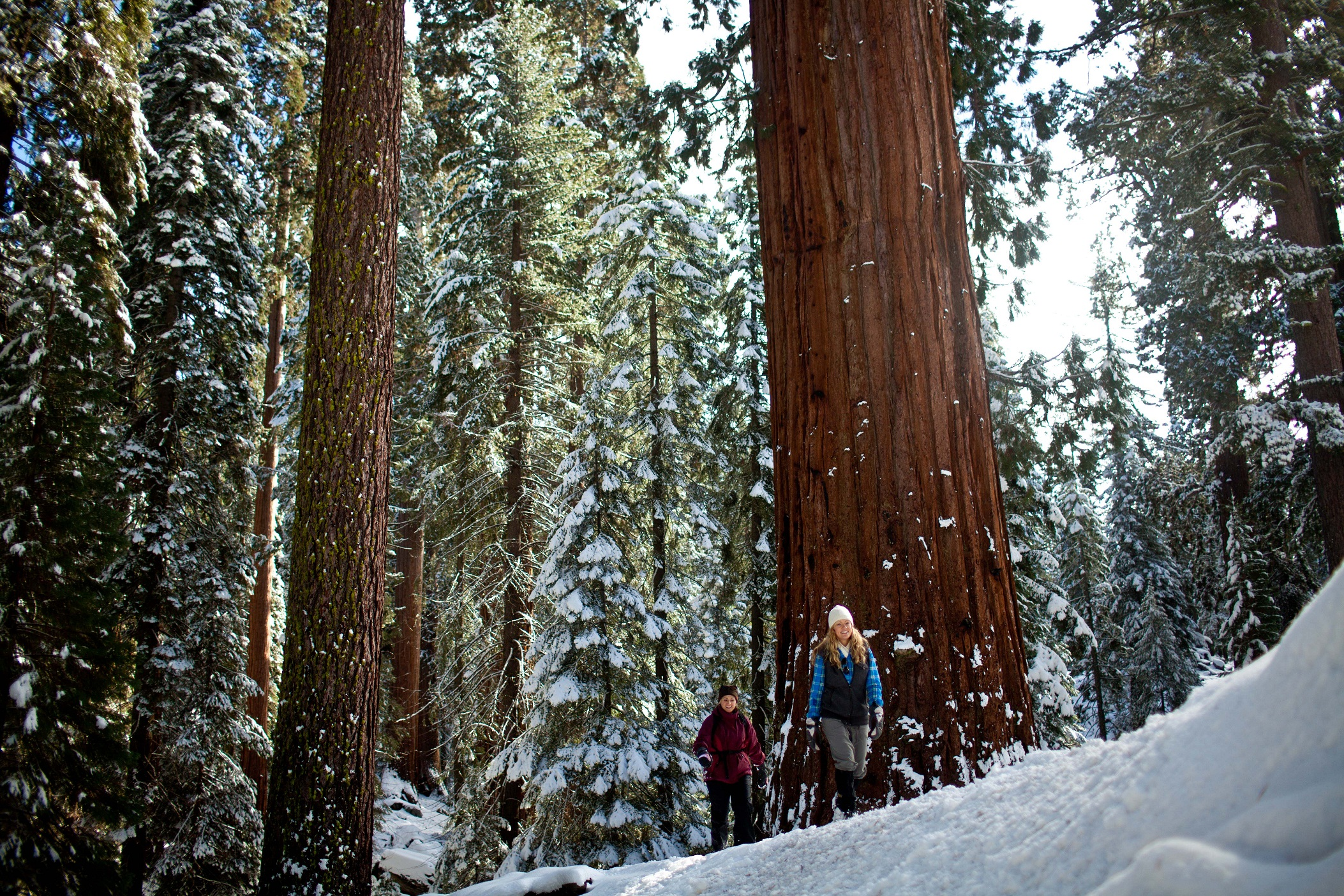 Image result for sequoia national park