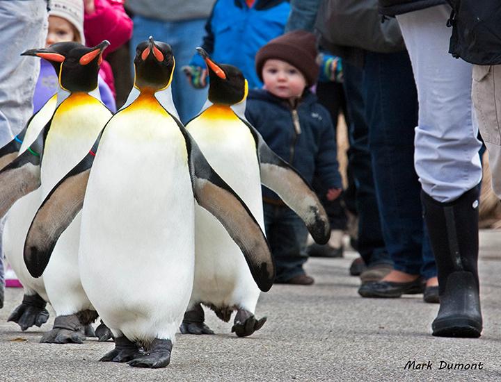 Cincinnati Zoo Amp Botanical Garden