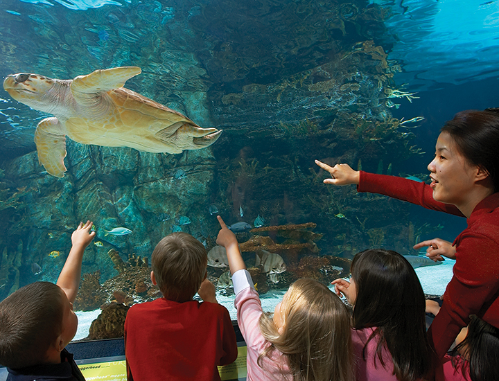 graphic regarding Newport Aquarium Coupons Printable known as Newport aquarium ticket discounts - The queen kapiolani resort
