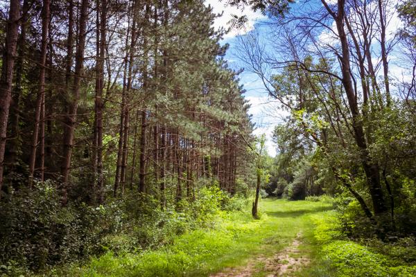 Peace Meditation and Hike
