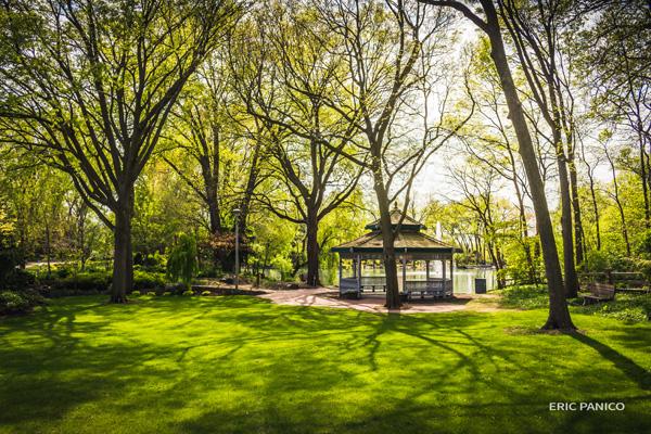 Botanic Talk: Gems of the Conifer World
