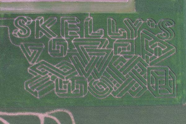 Skelly's Corn Maze