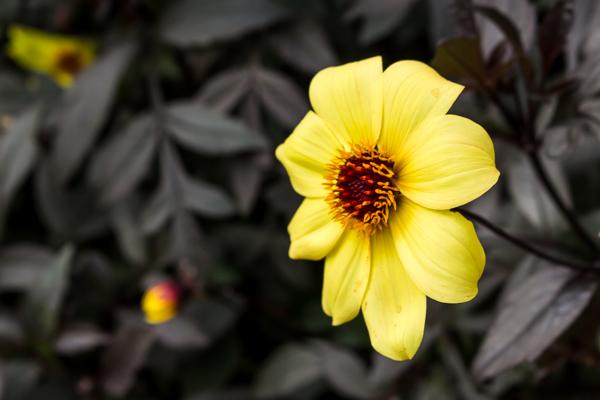 Garden Inspirations Series