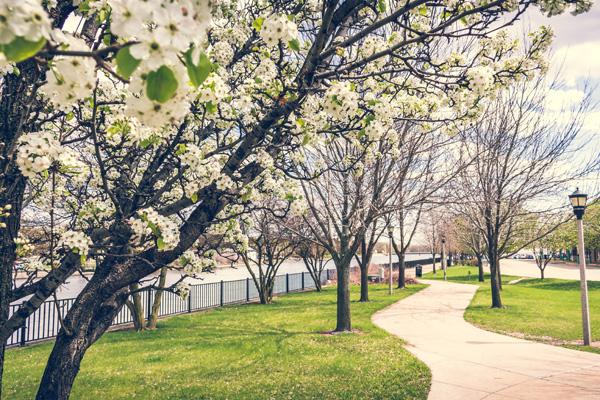 Spring Fling Walking Tour