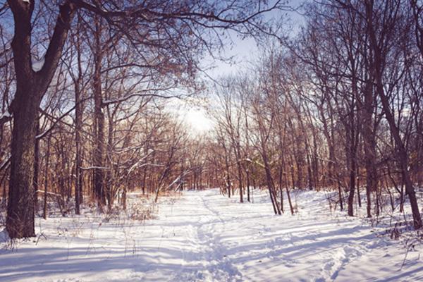 Crowd-Free Fun: Winter Nature Scavenger Hunt