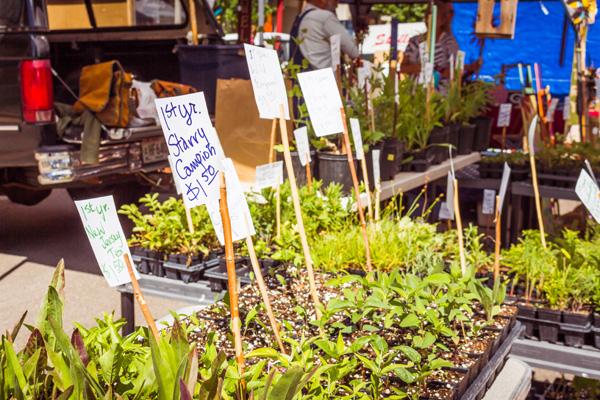 Janesville Farmers Market