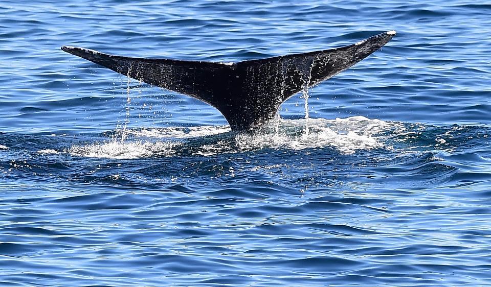 Farmers' Market Whales Fun Day
